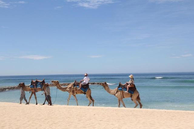 画像1: 1.【バリ・キャメル・サファリ】気分はまるでセレブ。ラクダに乗ってビーチをお散歩