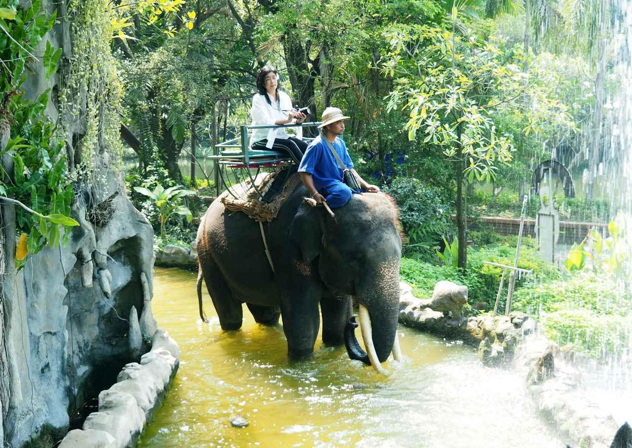 画像1: 10:30 「サンプラーン象園」で、象に乗ってジャングルを探検(所要時間2時間)