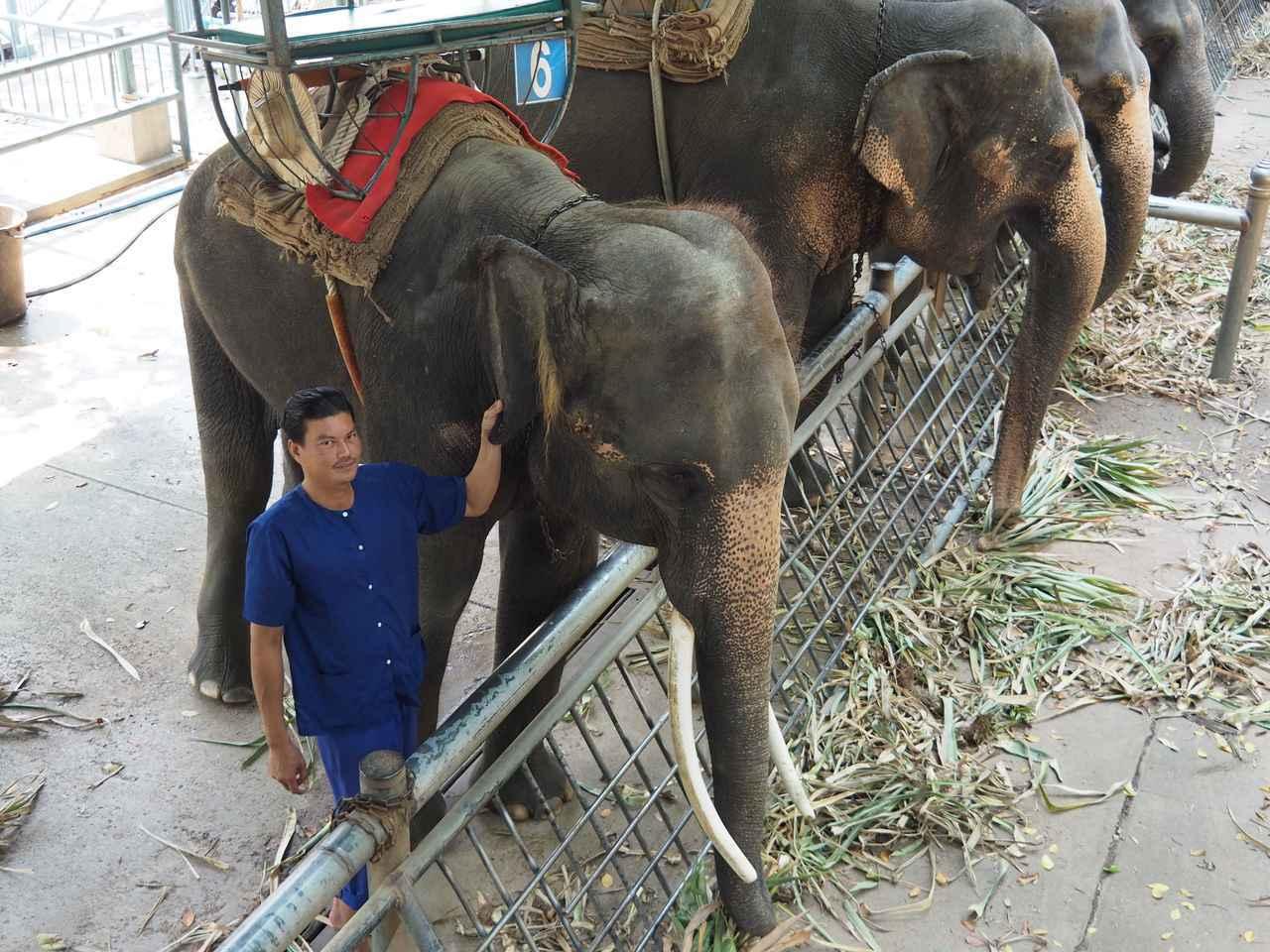 画像2: 10:30 「サンプラーン象園」で、象に乗ってジャングルを探検(所要時間2時間)