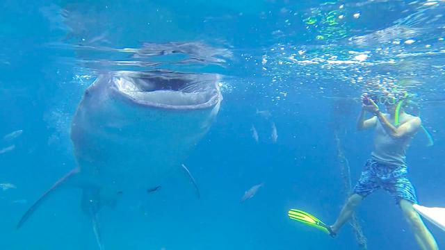 画像: 1.「ジンベエザメとシュノーケリング」大自然の中で生き物と触れ合い、圧倒される