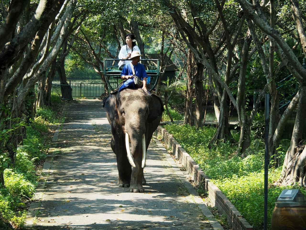 画像3: 10:30 「サンプラーン象園」で、象に乗ってジャングルを探検(所要時間2時間)