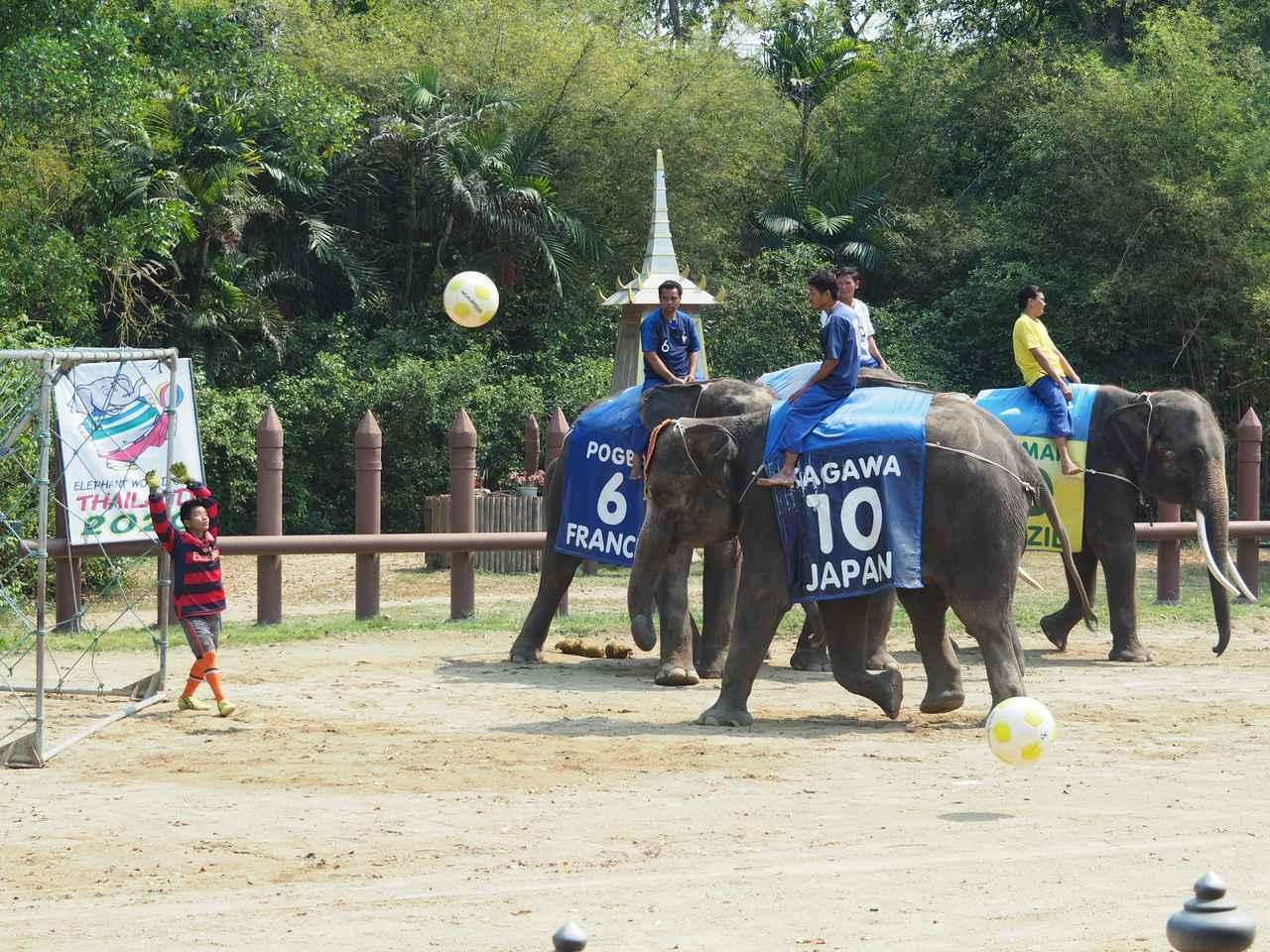 画像4: 10:30 「サンプラーン象園」で、象に乗ってジャングルを探検(所要時間2時間)