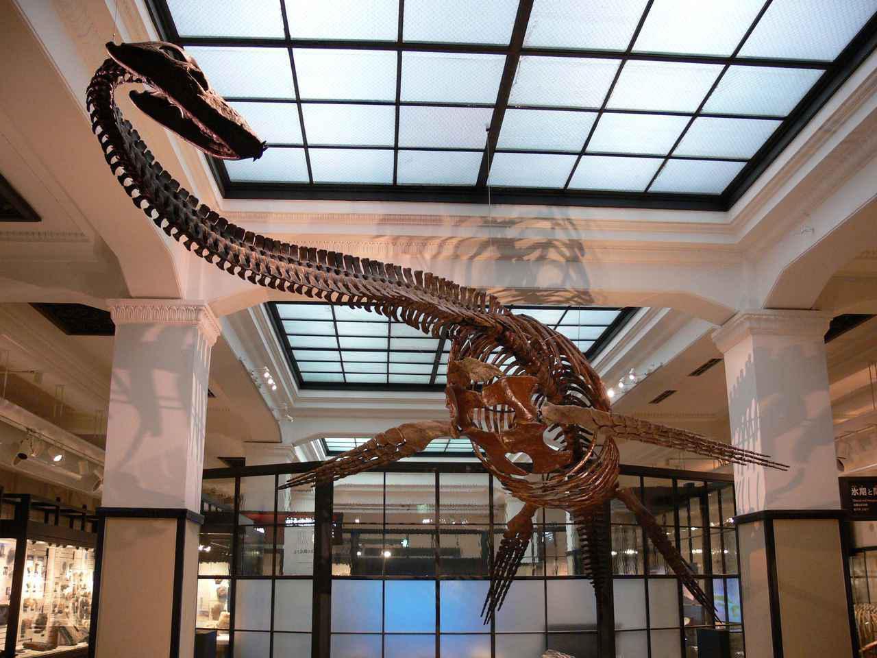 画像2: 提供:国立科学博物館