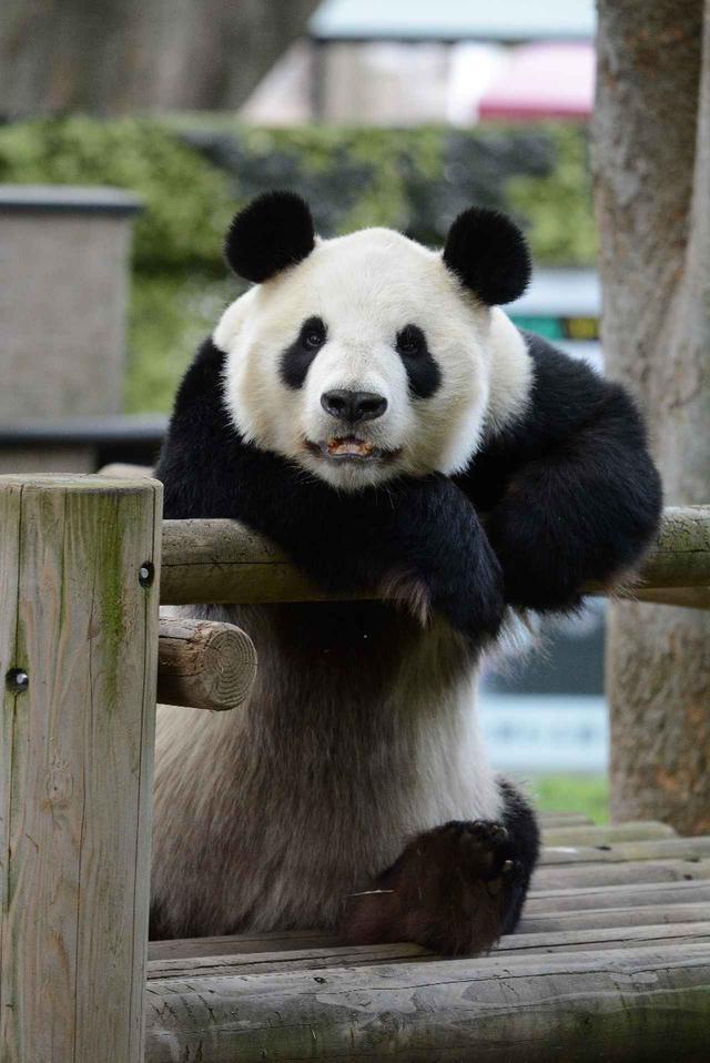 画像: 提供:東京動物園協会