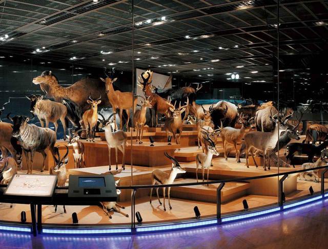 画像3: 提供:国立科学博物館