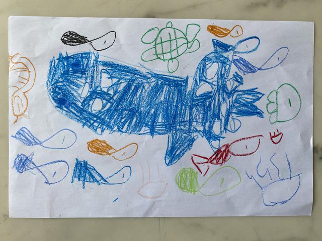 画像: ジンベエザメと一緒に泳ぐ(フィリピン・セブ島)