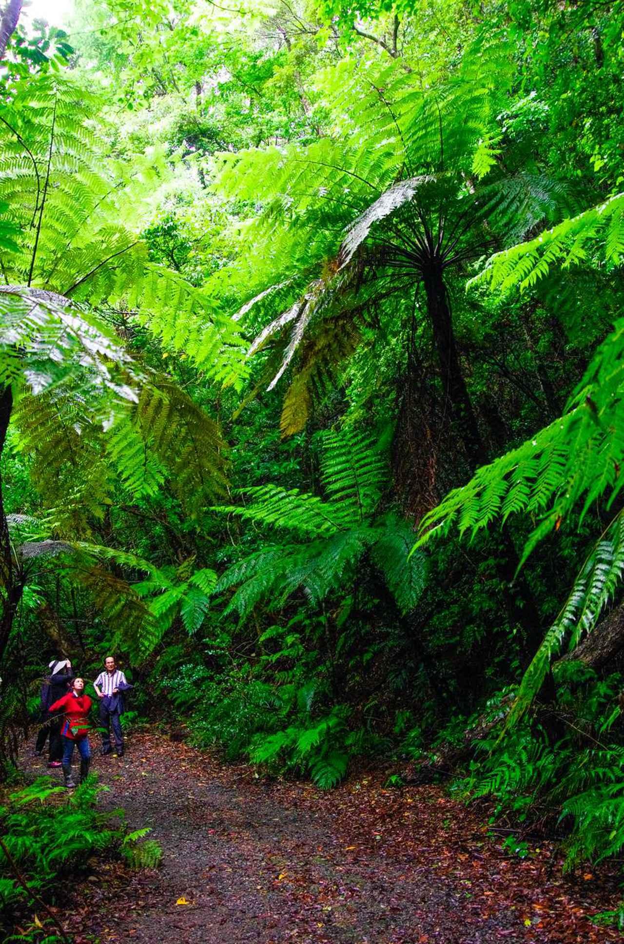画像1: 太古の森、金作原を散策する