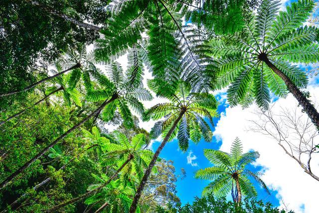 画像2: 太古の森、金作原を散策する