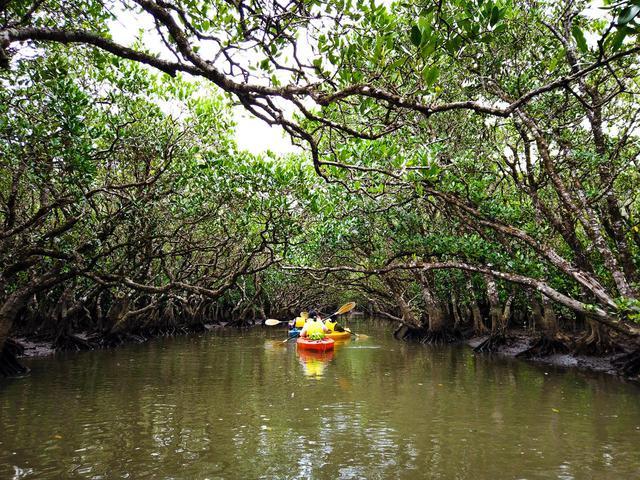 画像3: マングローブのトンネルをカヌーで進む