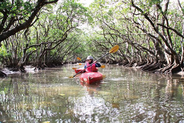 画像1: マングローブのトンネルをカヌーで進む
