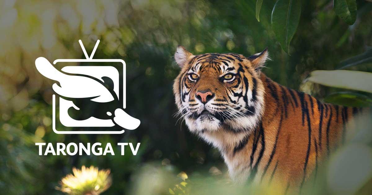 画像: Taronga TV