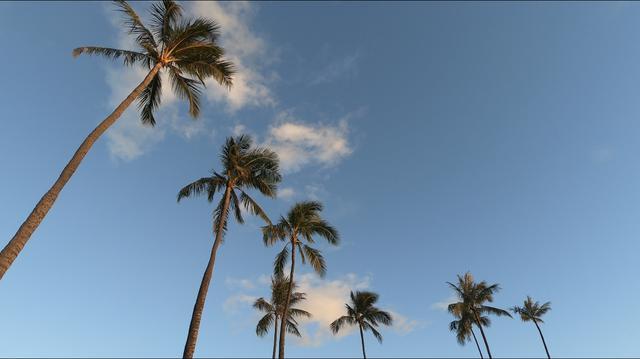 画像5: ハワイ現地スタッフ~ステイホーム期間の日常~