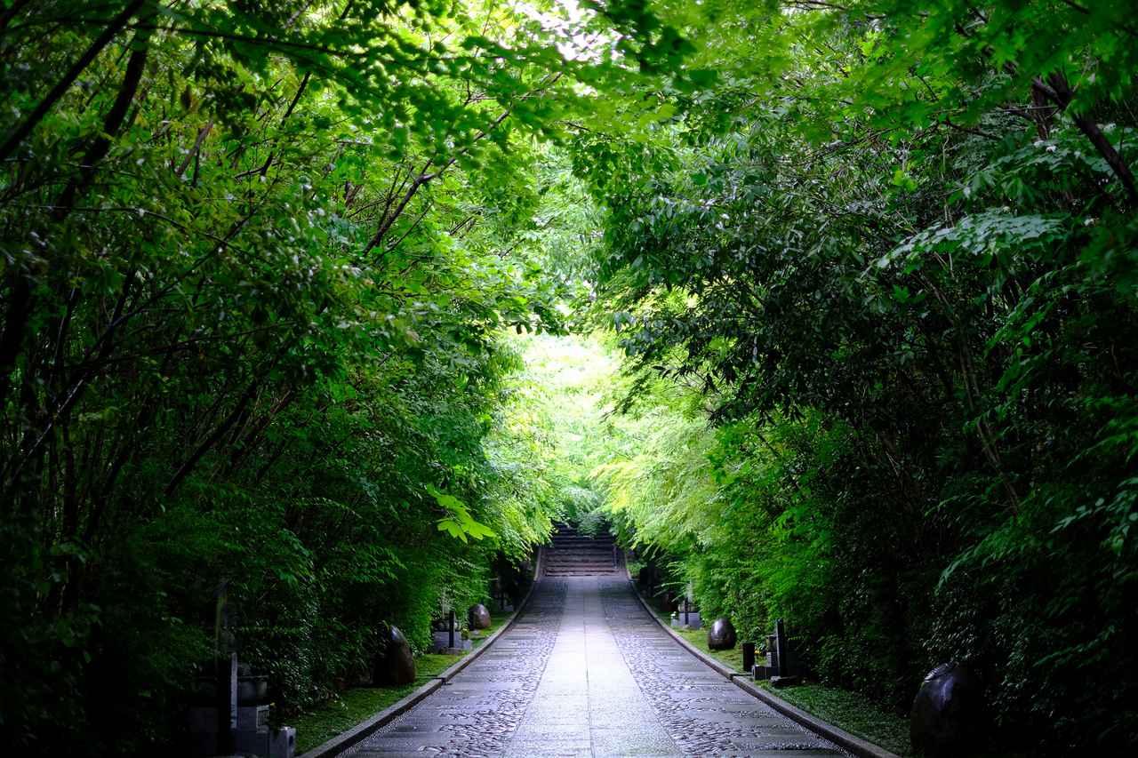 画像: 雨がそぼ降る中、参道は光り輝く緑色で溢れていました。