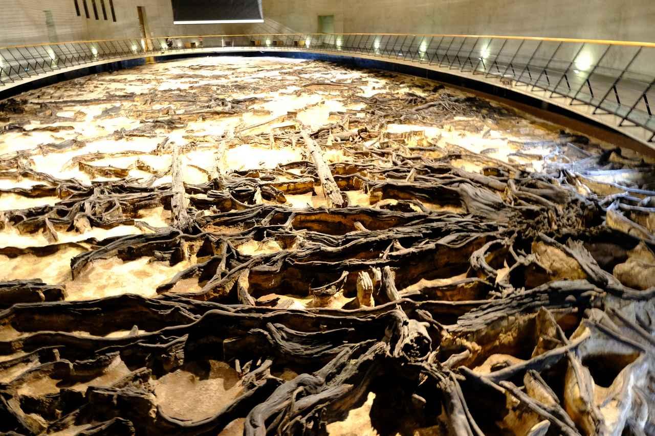 画像: 昭和63(1988)年、2万年前にここにあった針葉樹を主とする森が発掘されました。地下1階のほぼすべてが湿地帯にあった森の姿をそのままの姿で公開するという、独創性ある展示方法です。