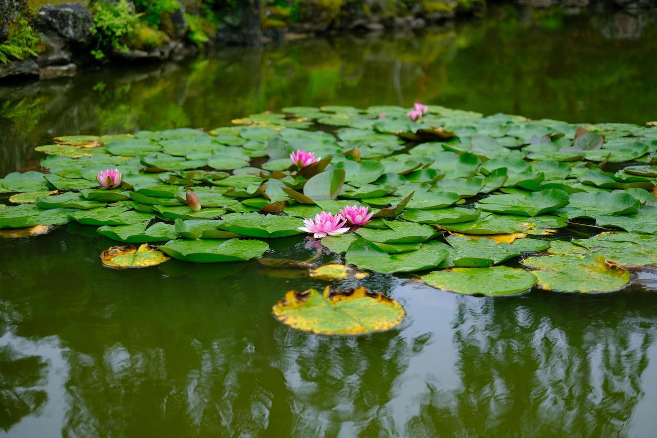画像: 残念ながら雨の散策となってしまいましたが、手入れが行き届いており美しい庭でした。この日は蓮の花が咲き始めていて、雨も良く似合いました。