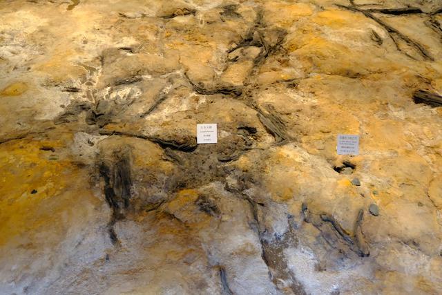画像: 富沢遺跡では森が見つかっただけでなく、旧石器人がここで活動した証である焚火の跡と槍に付ける石器を作り直した跡など、人の生活跡が見つかりました。この際どう行動したかについては研究と推察によりわかりやすい動画で解説されています。