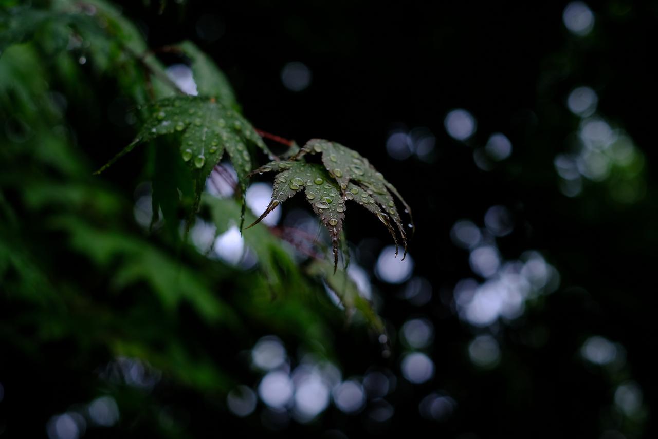 画像: 残念ながら雨が強くなってきてしまったので短めの滞在で終了。ゆーっくり散策すれば色んな草木や風景の発見がありそうです。もみじの木も多く、秋の紅葉時期も素晴らしい風景を期待できそうです。