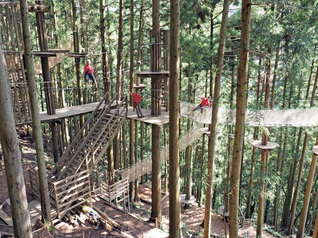 画像1: 『フォレストアドベンチャー・祖谷』でエキサイティングな樹上体験を
