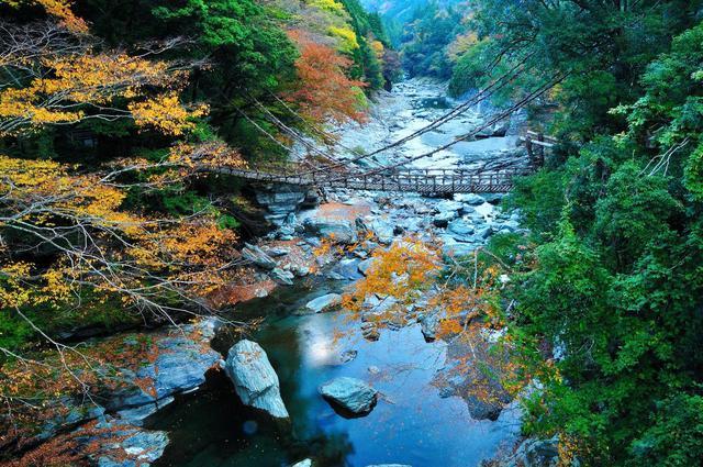 画像2: 【2日目】秘境ならではの絶景が満喫できる『祖谷のかずら橋』