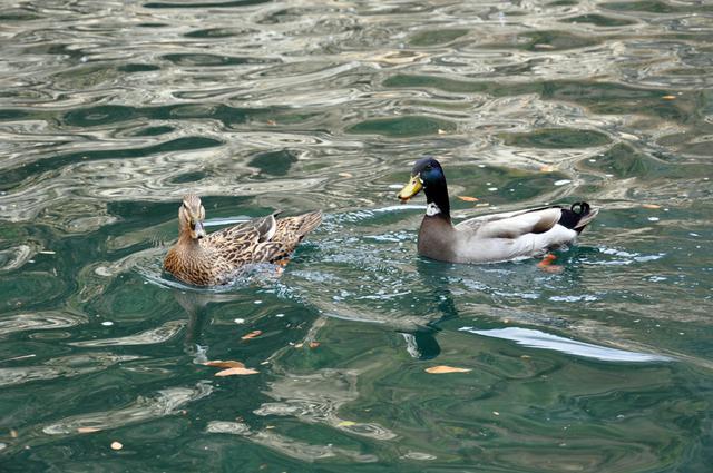画像4: 自然が生みだした絶景を『大歩危峡観光遊覧船』から眺めて