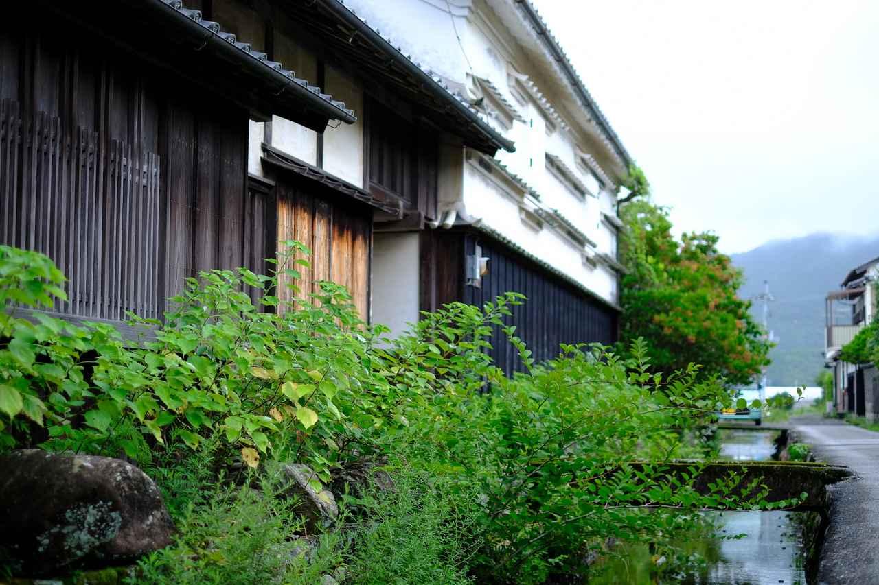 画像: 町中を流れる川もきれいで、周囲に生える自然の草花は生命力に溢れていました。