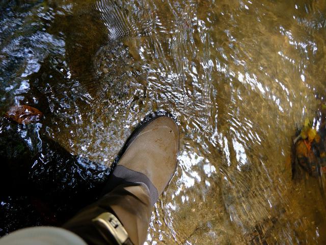 画像: 洞窟は行き止まりになることが多いのですが、伊尾木洞は奥が抜けて沢につながり、洞窟内にも川が流れています。この日は水が多い日でした。