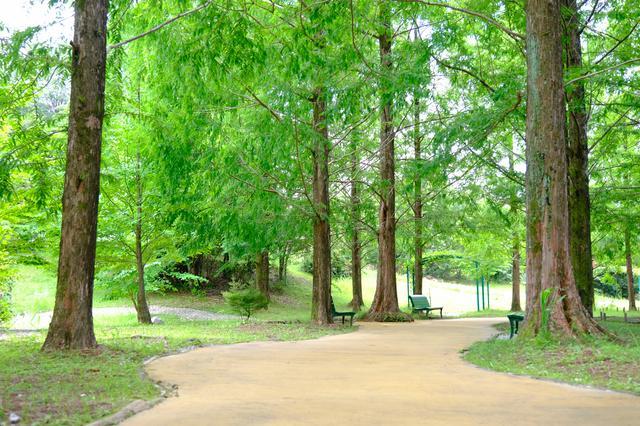 画像: 木立を抜けて次のエリア「ボルディゲラの庭」へ。20周年を機に新しくオープンした庭です。