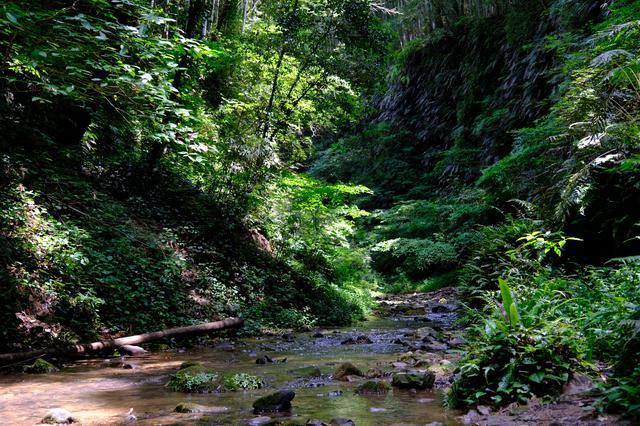 画像: 涼しい風が吹く洞窟でアクティブな体験と生物・植物観察を楽しみました。