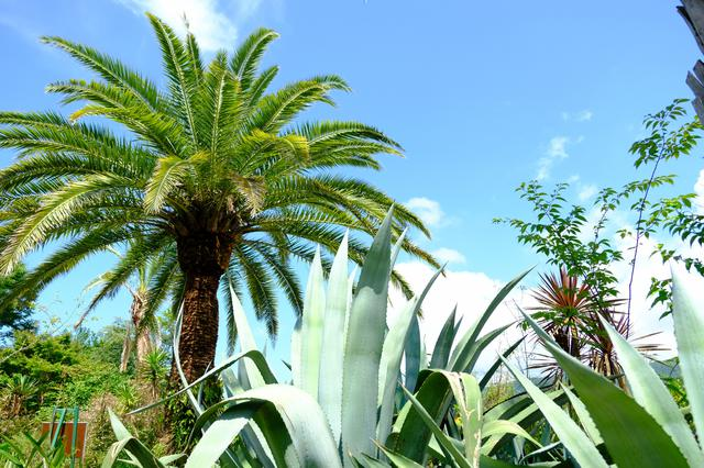 画像: 「水の庭」とはその趣を異にする、乾いた地中海の雰囲気が感じられます。