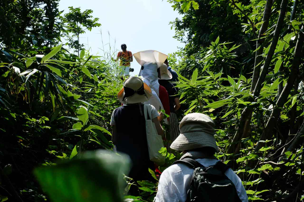 画像2: 上品な香りを持つクロモジを探しながら、やぶこざいて森を散策