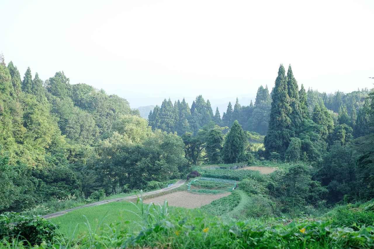 画像2: 【2日目】心地よい朝の空気でリフレッシュする、早朝さんぽ