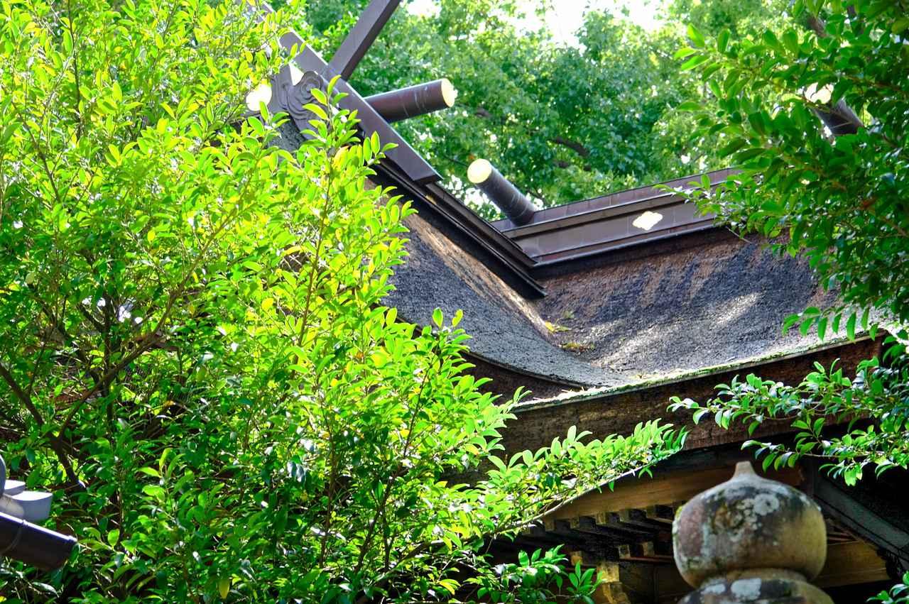 画像: 木々で全景は見られませんでしたが、檜皮造りの大変立派な屋根でした。