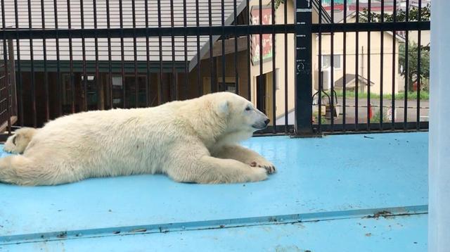 画像2: 北海道で2番目に古い「おびひろ動物園」の今