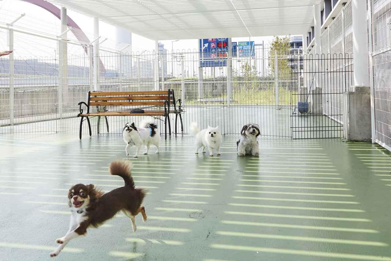 画像2: 羽田空港雑学File 3 早朝から最終便まで、大切なペットを預かるペットホテルがあります