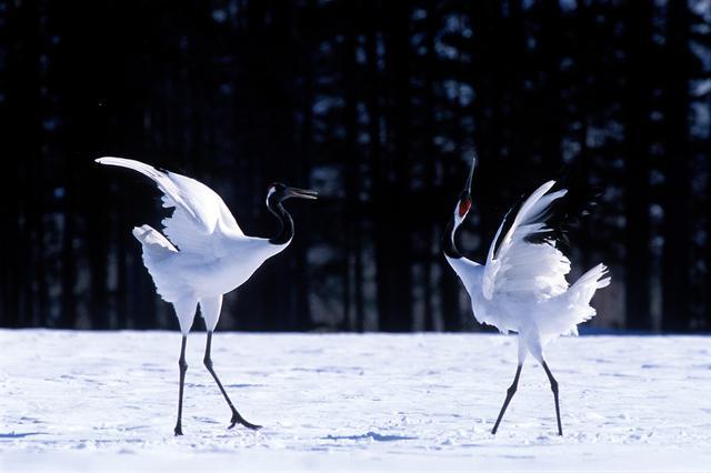 画像2: 冬は美しいタンチョウが飛来する自然の宝庫「釧路湿原」