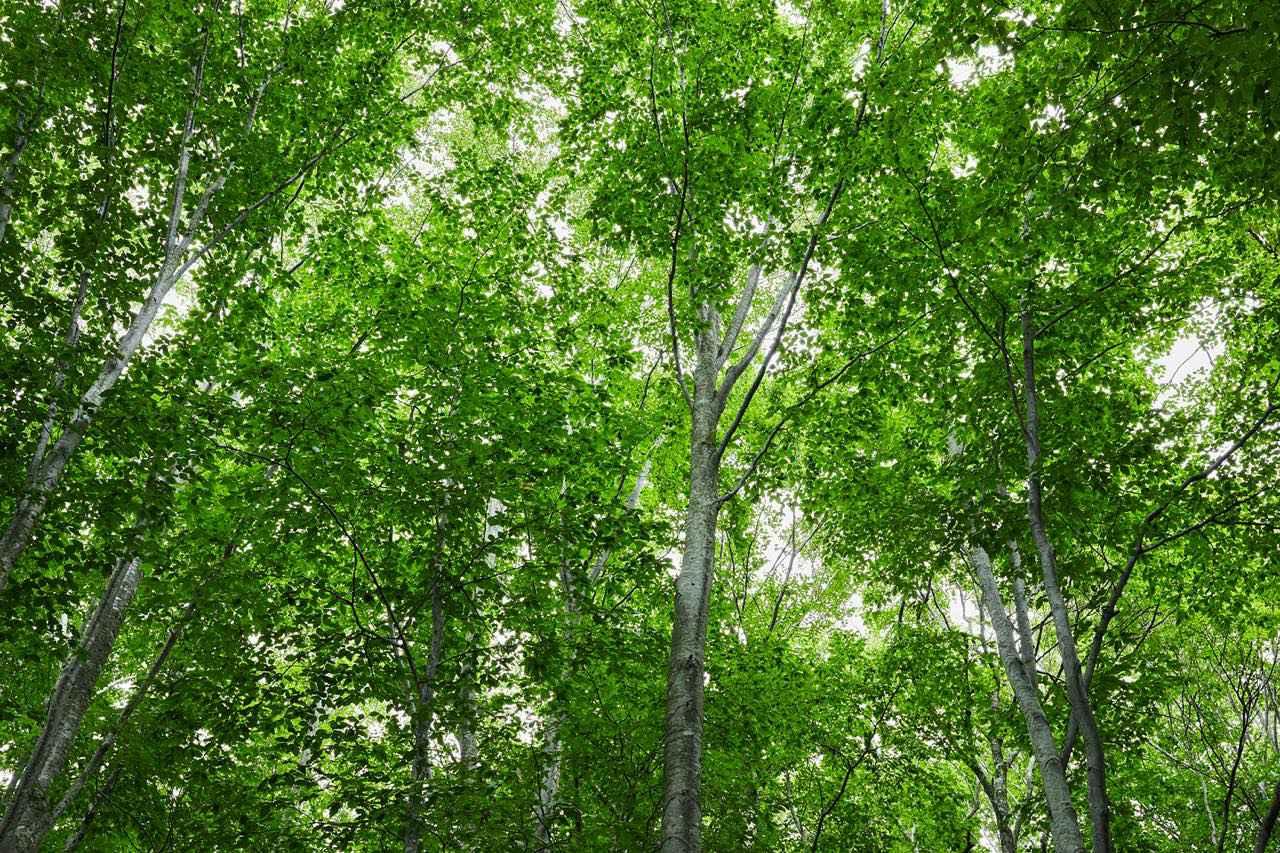 画像: 春夏秋冬と森の営み。大自然の懐に抱かれる夜