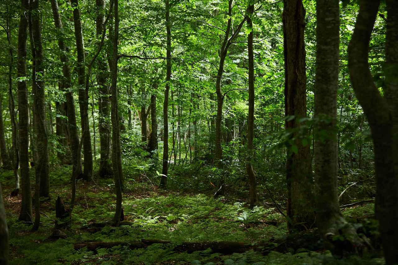 画像2: 小さな森に、深い学びが詰まった「岳岱(だけだい)」