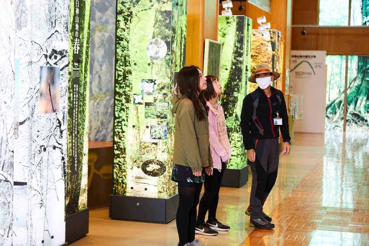 画像2: 白神の入り口。「白神山地世界遺産センター(藤里館)」
