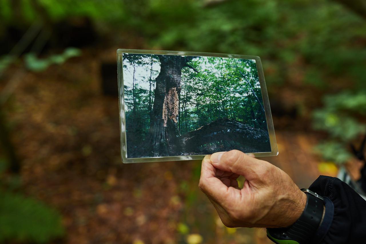 画像: 1999年の台風直後の写真