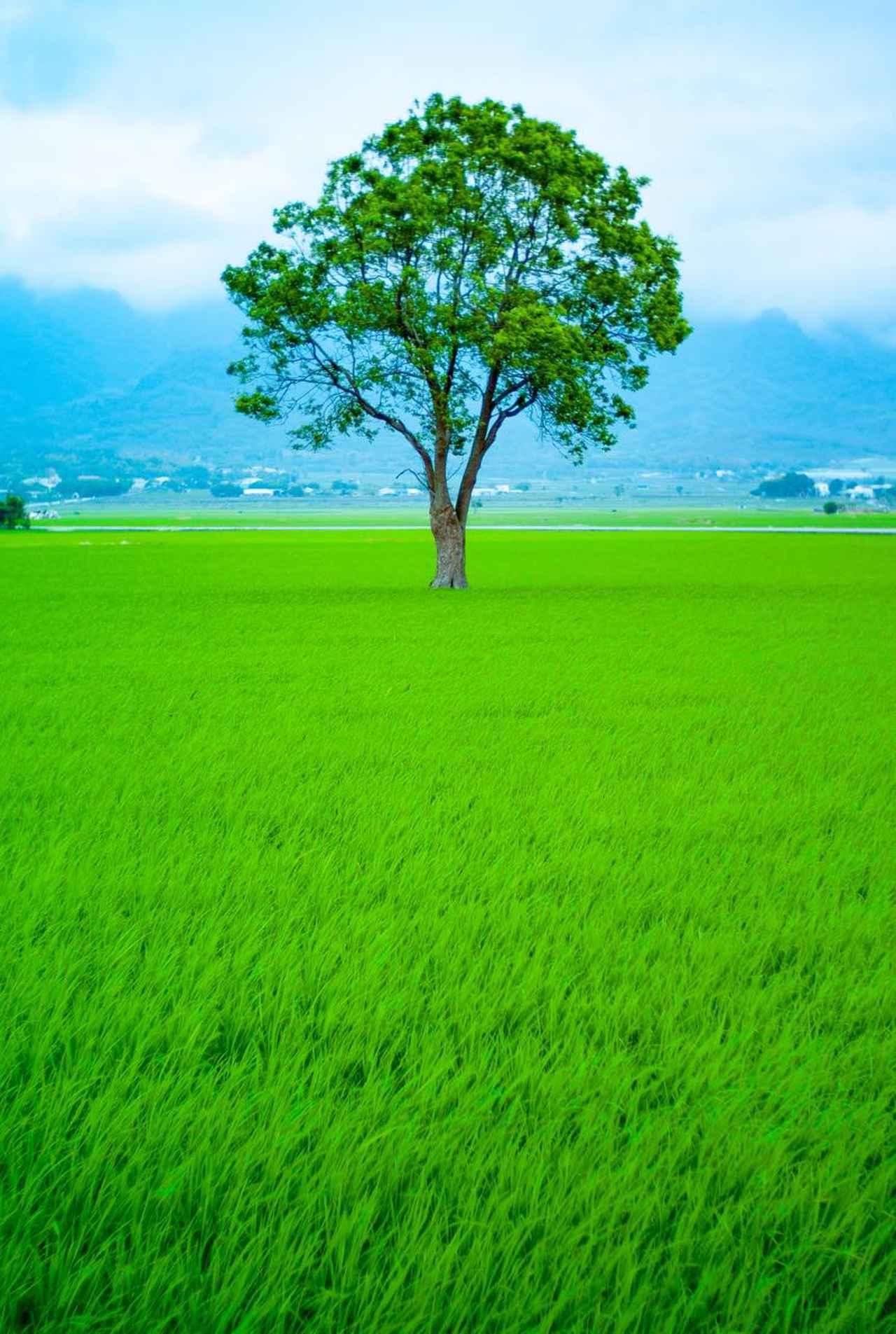 画像2: 台東らしい景色が楽しめる 台湾鉄路の車窓から見える景色(台東駅~金崙駅)