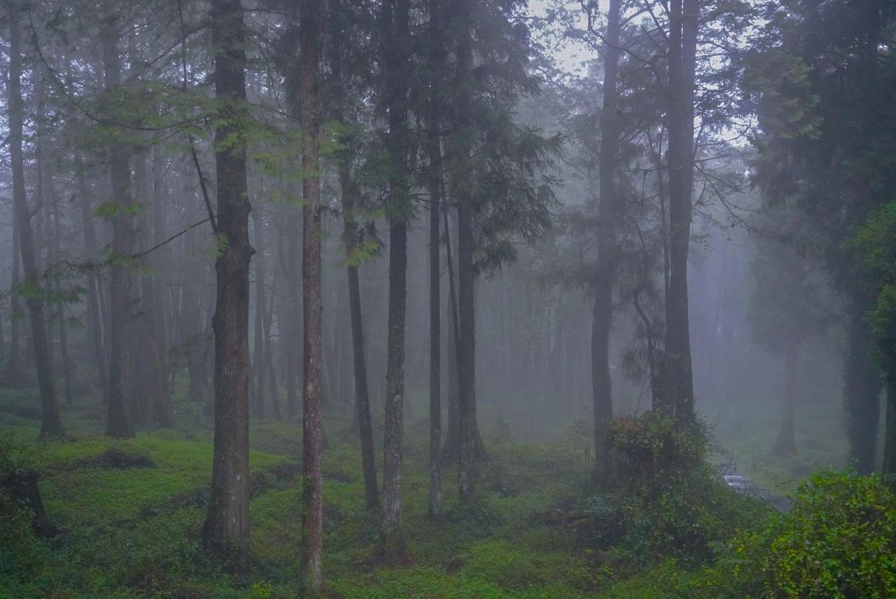 画像2: うっそうとした森を探検家気分で歩く 見晴古道