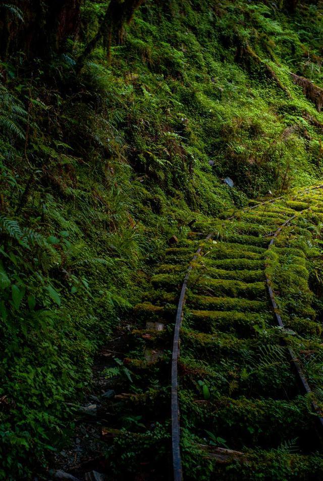 画像1: うっそうとした森を探検家気分で歩く 見晴古道