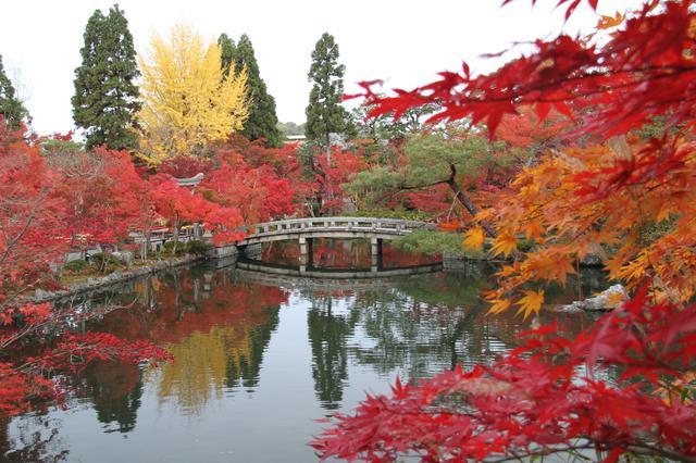 画像: 古今集にも詠まれた「もみじの永観堂」で多彩な紅葉と対峙
