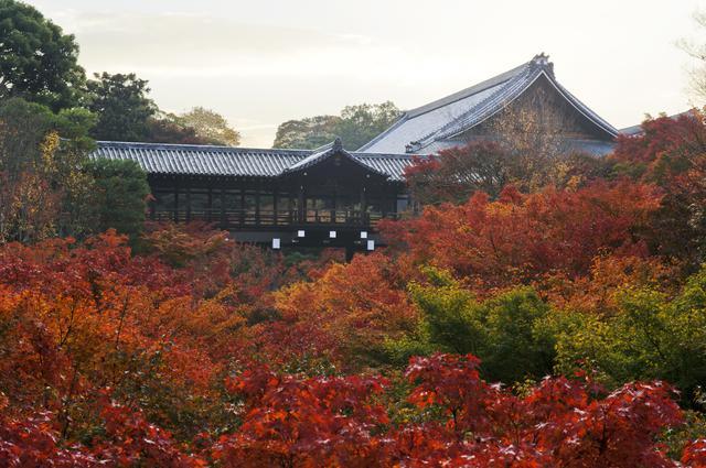 画像: 東福寺で紅に染まる圧巻の渓谷美に息をのむ