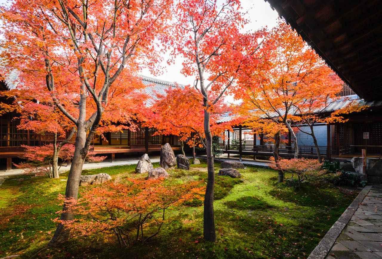 画像: 新旧のアートと紅葉がコラボする京都最古の禅寺・建仁寺