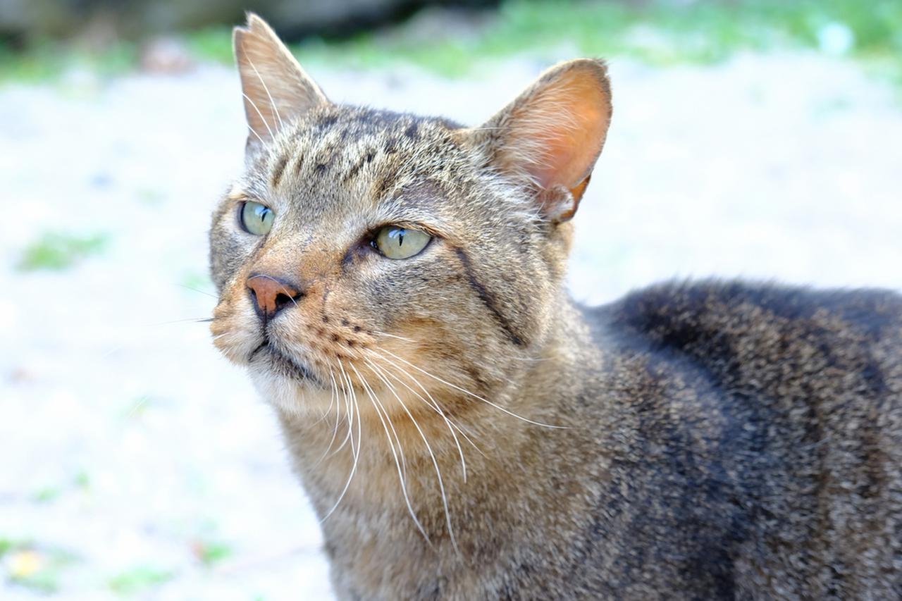 画像: 城ヶ島にはたくさんのネコ。可愛がられているのか、みんなふっくら毛艶も良くてなつっこいです。