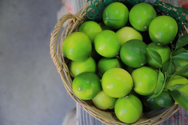 画像4: ふかふかの土で育った、体に優しい低農薬みかん