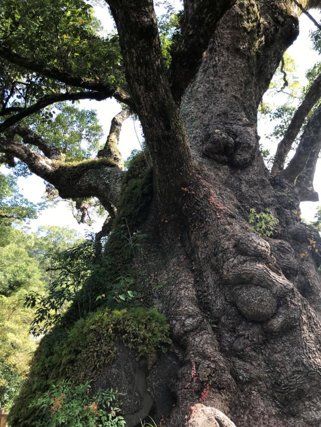 画像7: 鹿児島 歴史と自然、懐かしい日本の原風景。姶良市の魅力、再発見。
