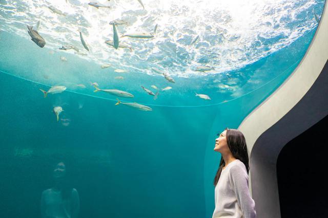画像3: 四国ならではの水族館で、四国の水景美と生命の神秘に触れる