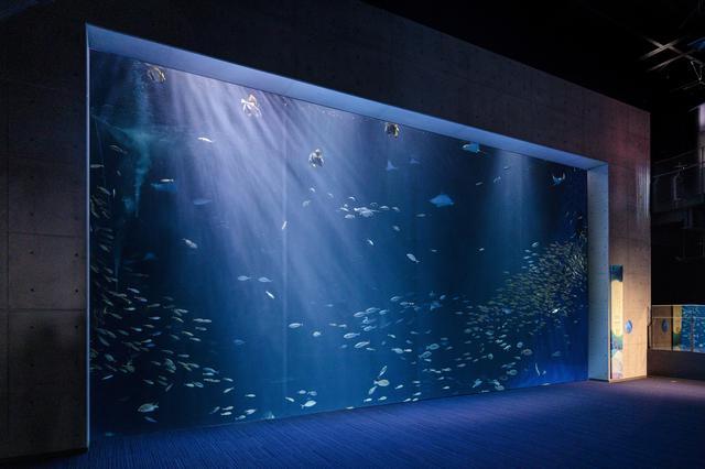 画像1: 提供:四国水族館